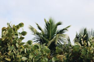 border planten schaduw
